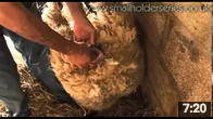 A Tricky Lambing with Adam Henson